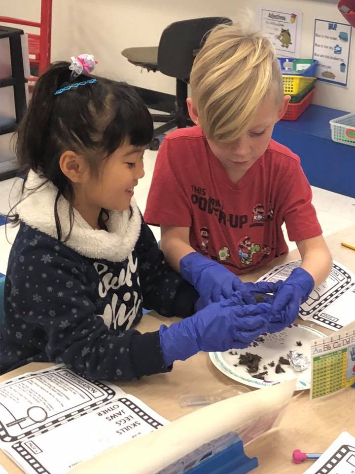 November 14th: Miss Sillman's First Grade Owl Pellet Activity